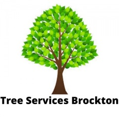Tree Services Brockton