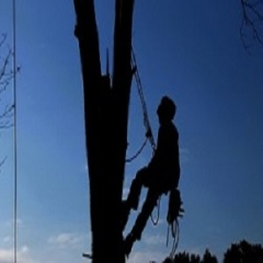 Elk Grove Tree Care